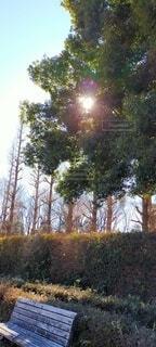 自然,空,公園,森林,屋外,ベンチ,葉,景色,光,樹木,暖かい,幻想,草木