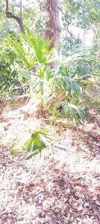 暖かい植物の写真・画像素材[4410041]