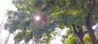 樹木からのこんにちはの写真・画像素材[4410038]