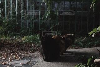 猫,動物,屋外,緑,2匹,樹木,野良猫,地面,黒猫,ネコ科