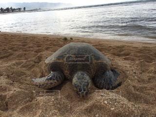 海,空,ハワイ,Hawaii,ウミガメ,オアフ島,Oahu island,sea turtle