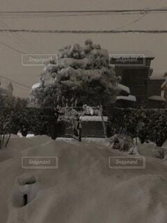 自然,空,冬,木,雪,屋外,白黒,家,樹木,冷たい,豪雪,白い世界