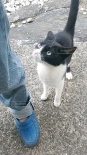 足元から見上げる猫の写真・画像素材[4193381]