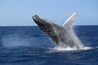 海,空,動物,波,水面,クジラ,沖縄の冬