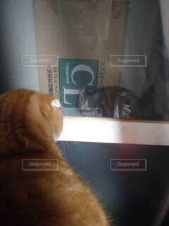 猫,動物,屋内,見つめる,見る,喧嘩,ネコ科