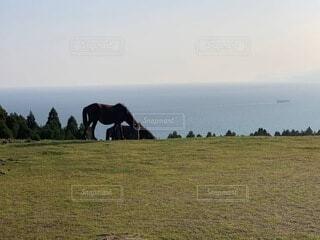風景,空,動物,草原,景色,馬