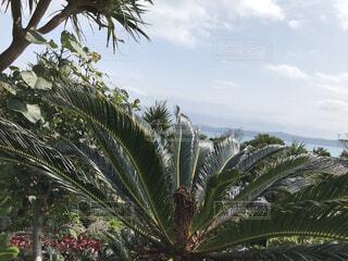海,空,屋外,南国,雲,青空,島,沖縄,樹木,ソテツ,草木,日中
