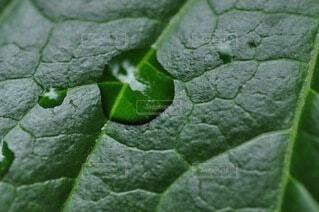 自然,緑,水,水滴,葉,景色,葉脈,草木