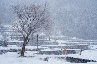 雪の日 大きな木と人の写真・画像素材[4201694]