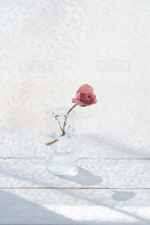 窓際の赤い薔薇の写真・画像素材[4335885]