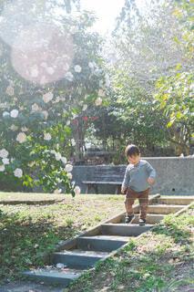 木漏れ日の公園を散歩する男の子の写真・画像素材[4271640]
