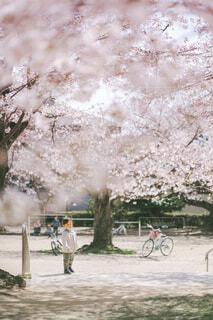 桜の下に佇む男の子の写真・画像素材[4288327]