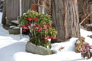 雪,南天,草木