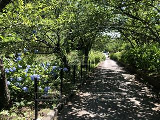 自然,公園,夏,屋外,あじさい,景色,樹木,紫陽花,日陰
