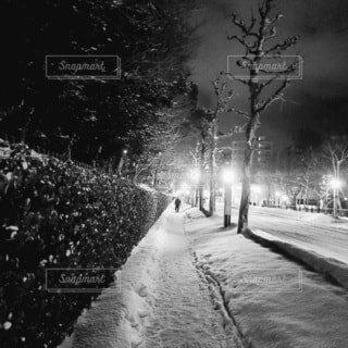 自然,空,冬,夜,雪,屋外,霧,樹木,道,壁,寒い,歩道,明るい,通り,1人,黒と白