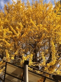 秋,屋外,樹木