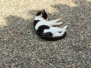 猫,動物,白,黒,地面