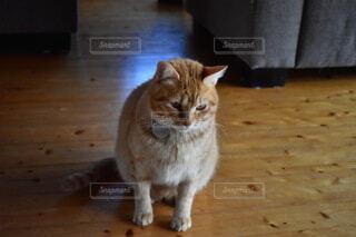 猫,動物,かわいい,床,ネコ科