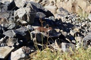 動物,屋外,山,岩,オコジョ