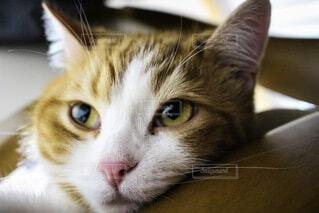 猫,動物,かわいい