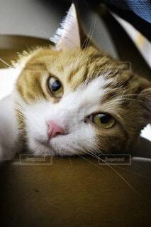 猫,動物,かわいい,見つめる
