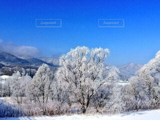 自然,風景,空,冬,雪,屋外,北海道,山,樹木,富良野