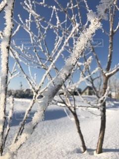 自然,冬,雪,屋外,北海道,樹木,小枝