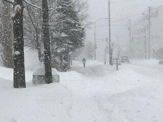 自然,冬,雪,屋外,北海道,吹雪