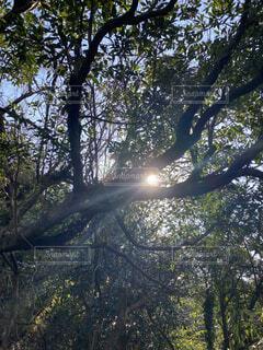 自然,空,森林,屋外,日光,樹木,草木