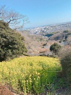 自然,風景,空,花,屋外,菜の花,山,草,樹木