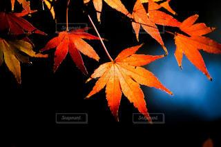 近くの木のアップの写真・画像素材[848999]