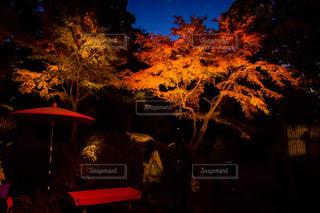 背景の夕日とツリーの写真・画像素材[849002]