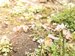 自然,花,春,冬,屋外,植物,散歩,雑草,暖かい,地面,草木,初春,咲き始め,ガーデン,芽吹き