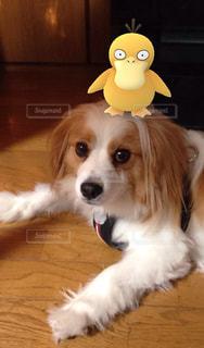 犬の写真・画像素材[182702]