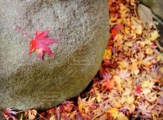 秋,紅葉,葉,石,カエデ
