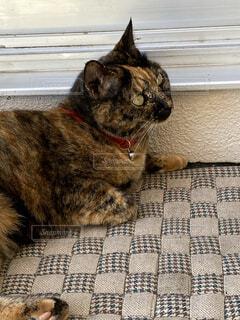 猫,動物,屋内,かわいい,景色,ねこ,ペット,ぬこ,ネコ科