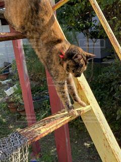 猫,動物,屋外,かわいい,ねこ,ペット,フェンス,ぬこ