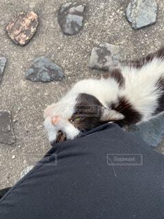 公園,動物,屋外,景色,寝転ぶ,寝る,野良猫,地面