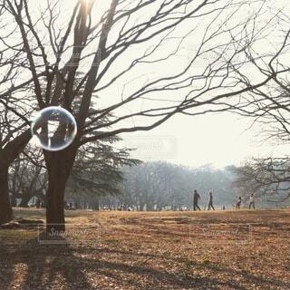 自然,公園,冬,影,樹木,しゃぼん玉