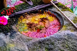 風景,花,紅葉,京都,観光,ハート,旅行,デート,カラー,インスタ映え,楊谷寺