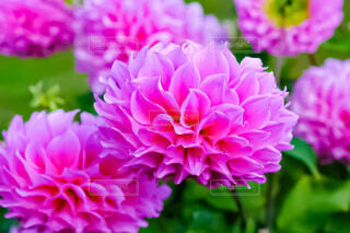 風景,花,紫,景色,花びら,草木,インスタ映え