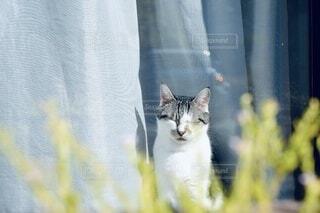 猫,動物,昼寝,日向ぼっこ