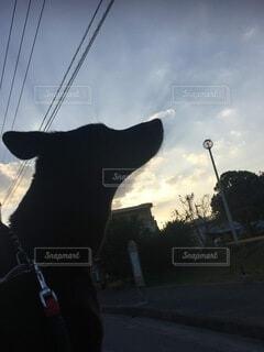犬,空,清々しい,軽トラ