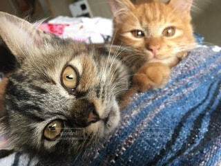 猫,兄弟,日向ぼっこ,見つめる