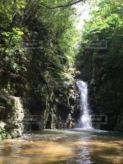 自然,森林,森,川,沖縄,滝,樹木,やんばる
