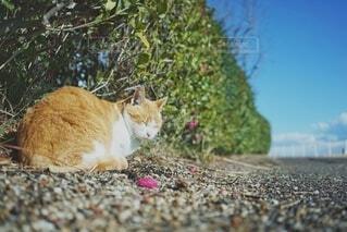 猫,空,動物,屋外,かわいい,青,樹木,可愛い,地面,日中