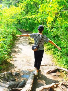 森林散策の写真・画像素材[4211450]
