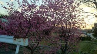 空,花,春,屋外,樹木,草木,桜の花,ブロッサム