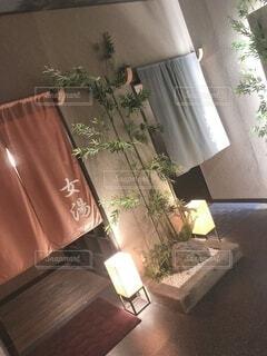 屋内,カーテン,家,床,植木鉢,壁,家具,観葉植物,草木