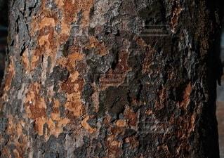 風景,茶色,樹木,錆,テクスチャ,けやき,草木,樹皮,ケヤキ,欅